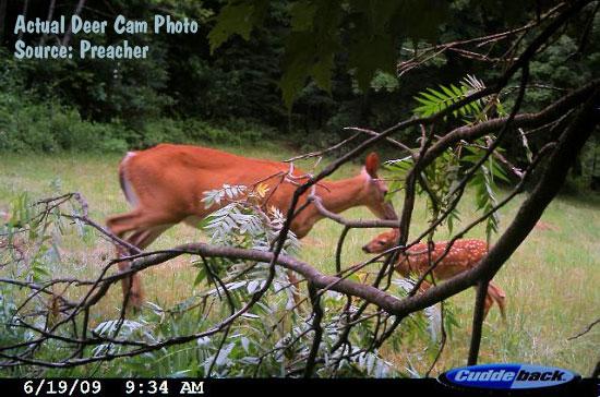 Cuddeback Deer Cam