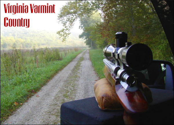 groundhog varmint rifle .243 6mm Rem Remington Ackley Improved AI